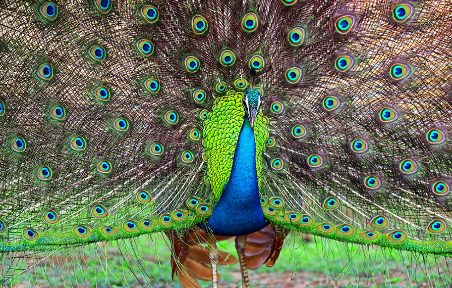 Yala Nationalpark Safari günstig buchen